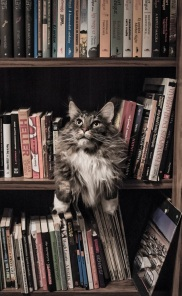 cat-on-bookshelf-small-pexels-photo-156321