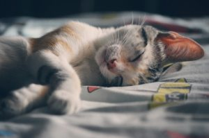 sleeping cat pexels-photo-62640