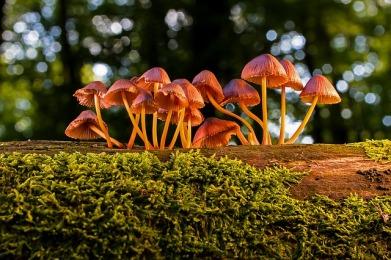 mushroom-3659165_640